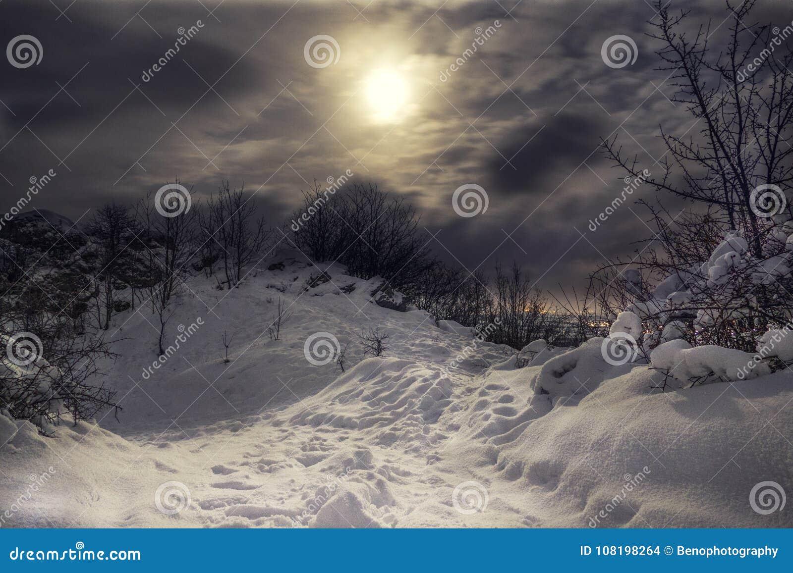 Milou et le dessus gelé de la colline avec le ciel nocturne nuageux et du clair de lune avec la ville s allume sur le fond Forêt