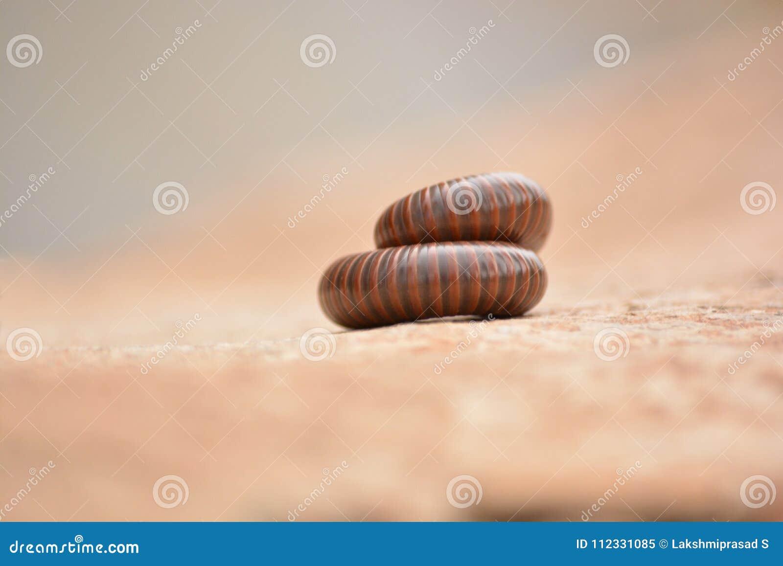 Milpiés encrespado encima de roud durante el seasion
