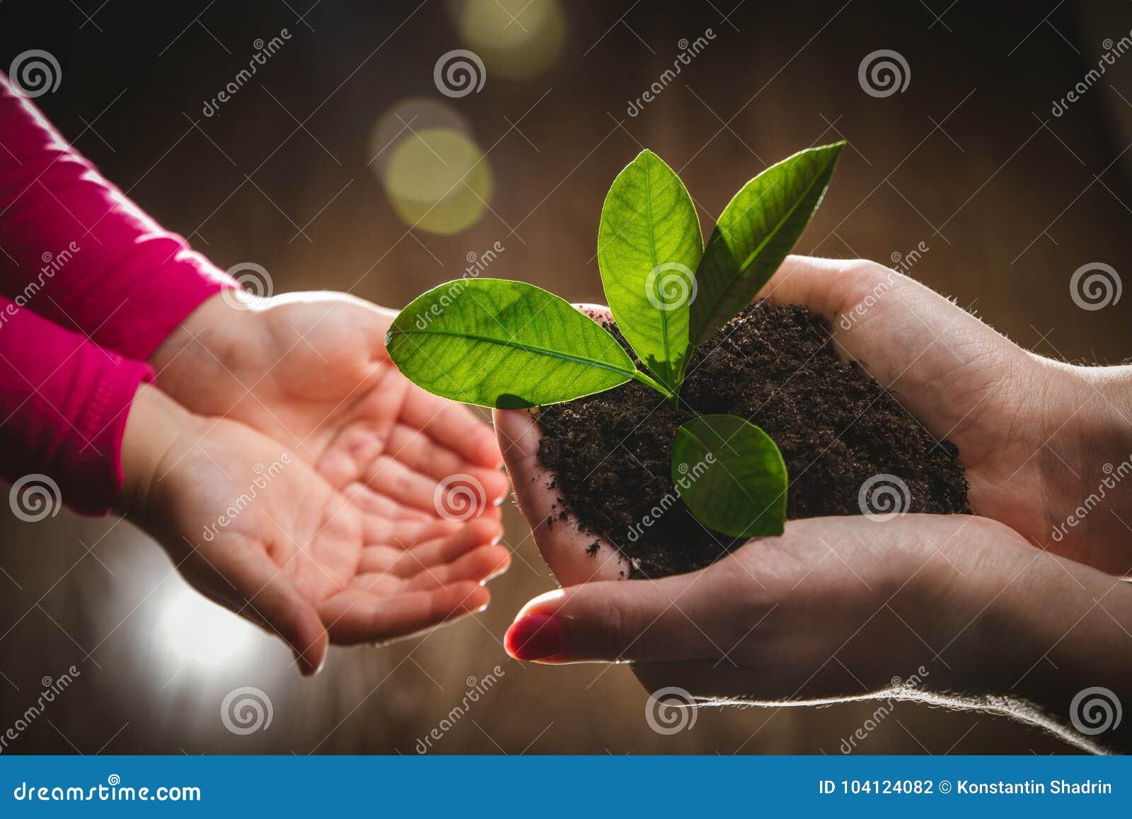 Mime a la mano del ` s que da el árbol joven a un niño para plantar junto en fondo verde de la naturaleza