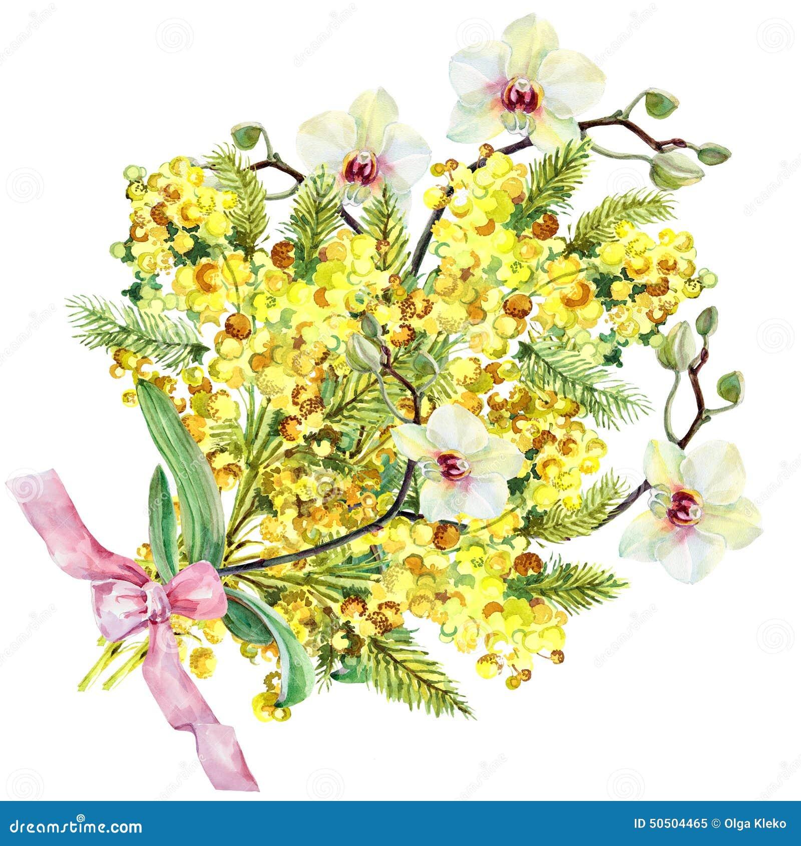 Mimosa del mazzo orchidea ed arco acquerello for Disegni e prezzi del mazzo