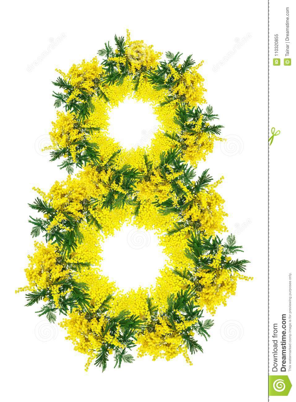 Fiori 8 Marzo Foto.Mimosa Flower Blossom Isolated On White Background Number Eight