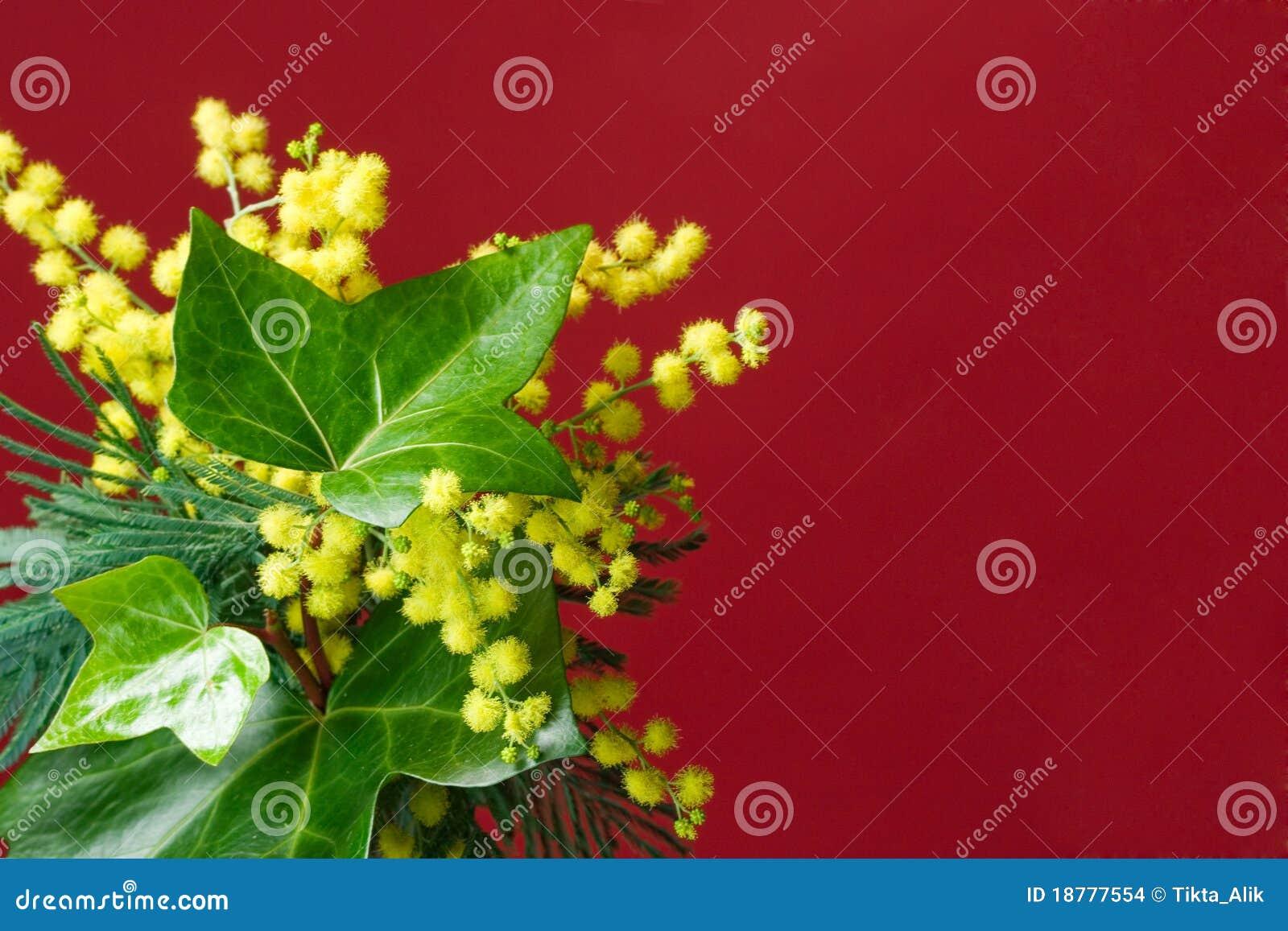 Mimosa And Ivy Spring Border Stock Photo Image Of Border Greeting