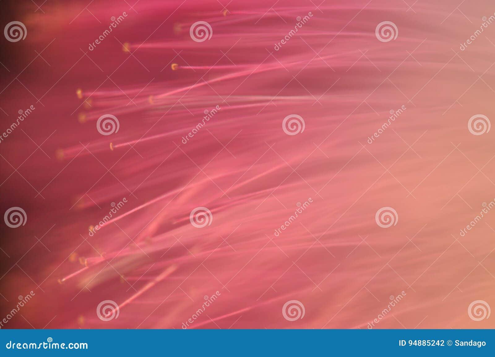 Mimosenmakrodetail