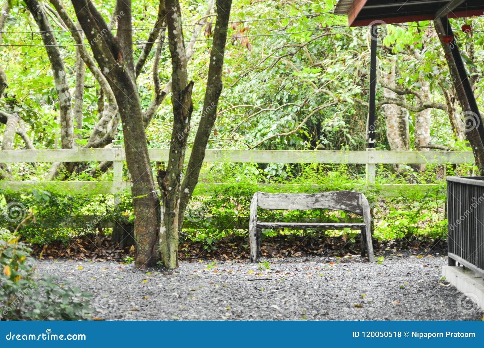 Minha casa na floresta