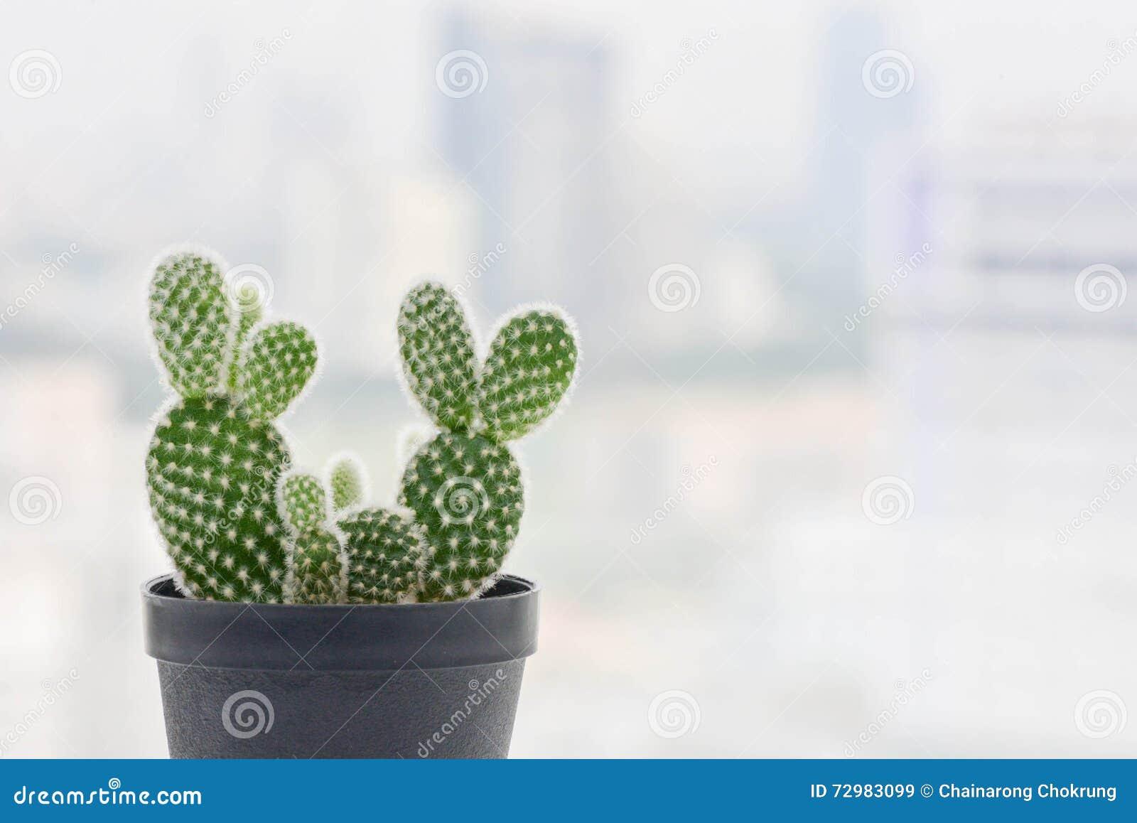 mini jardim de cactus:Mini Cactus