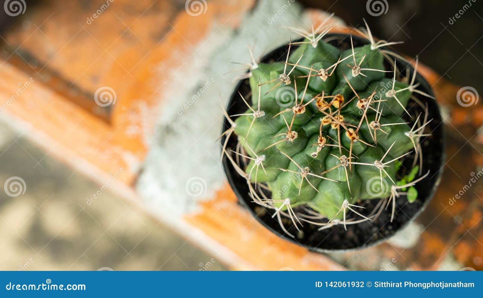 Mini cactus en jardín
