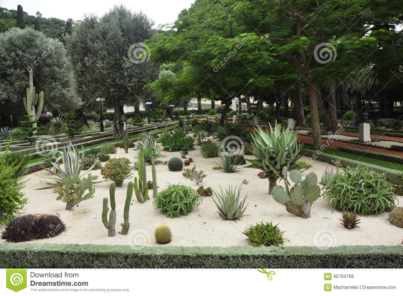 Mini cactus royalty free stock image for Decoration jardin cactus
