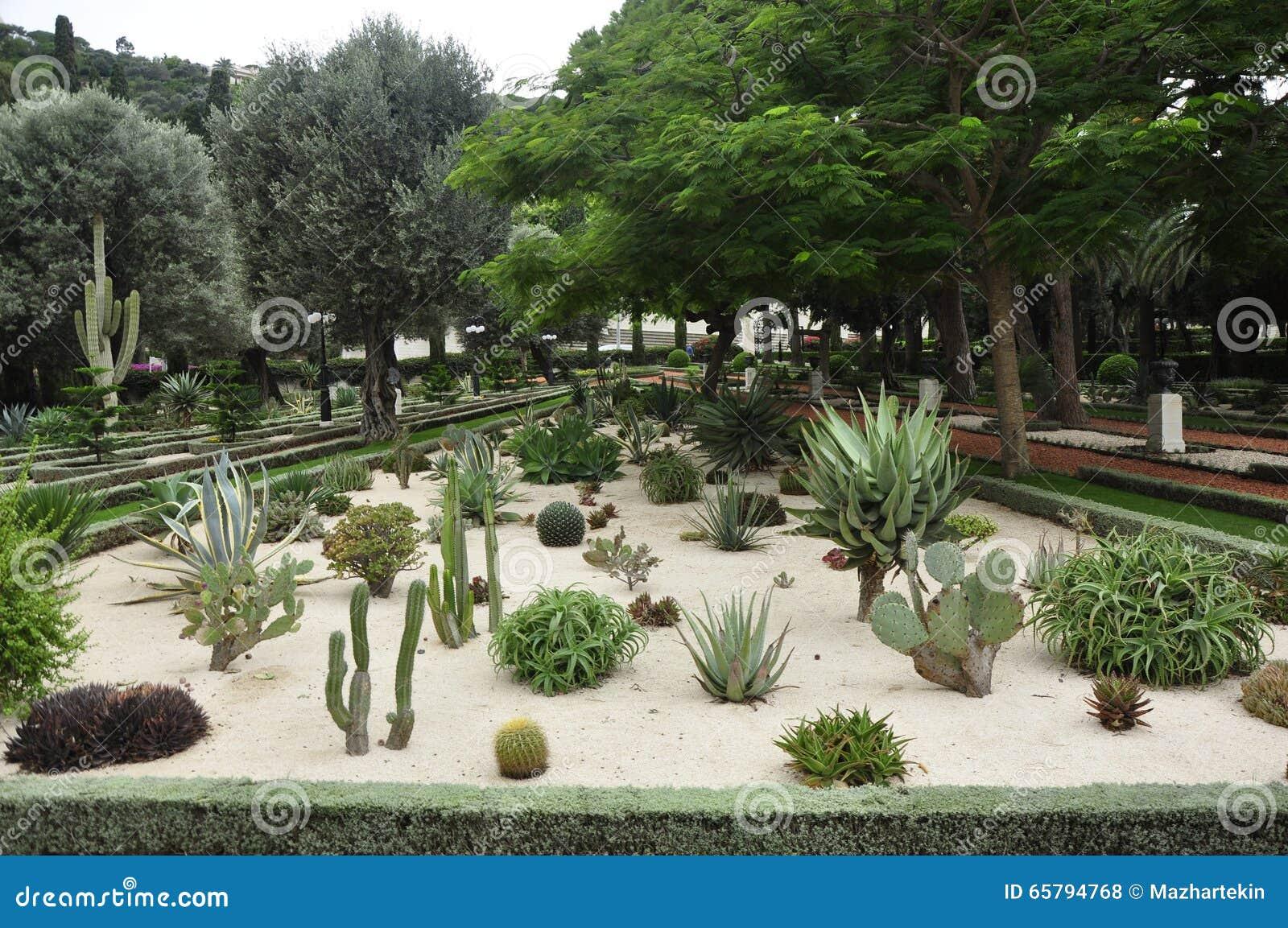 Mini cactus garden in stock photo image of mini assorted for Jardines con cactus