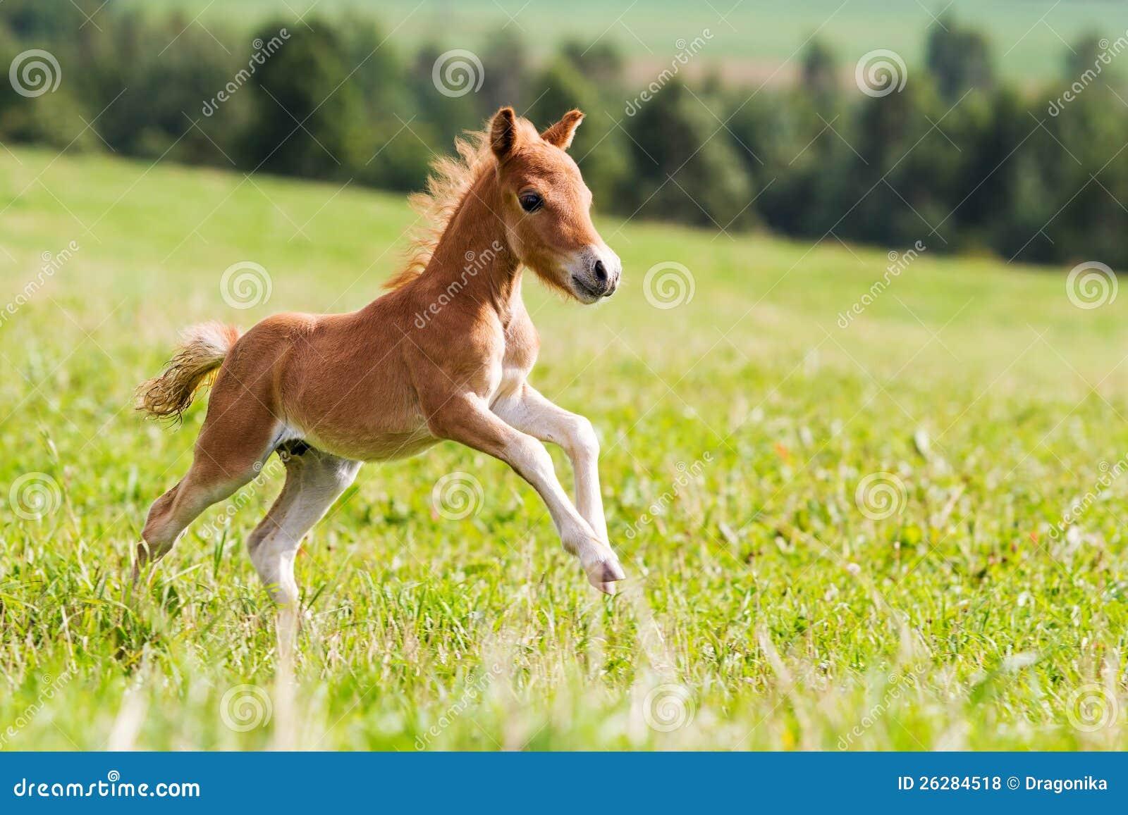 7 horses running wallpaper hd