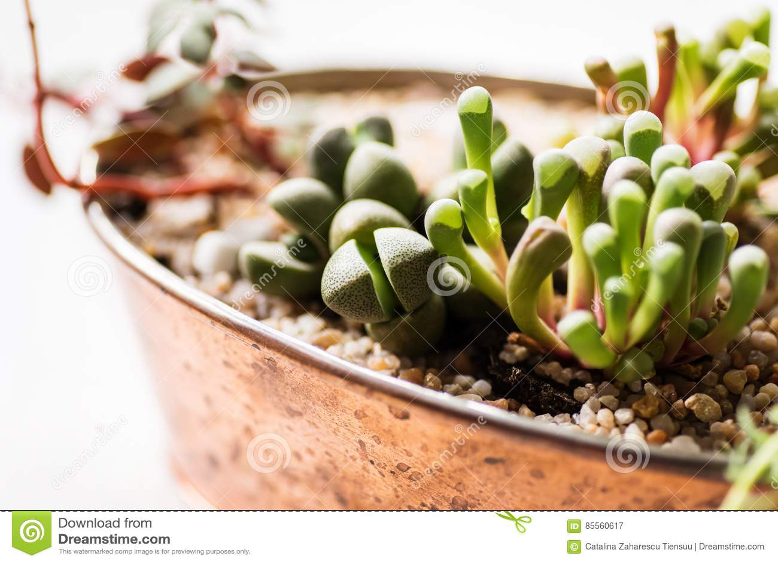 Mini garden in a copper pot