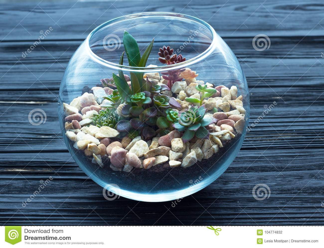 mini garden in glass vase on the wooden background stock photo image of stones miniature. Black Bedroom Furniture Sets. Home Design Ideas