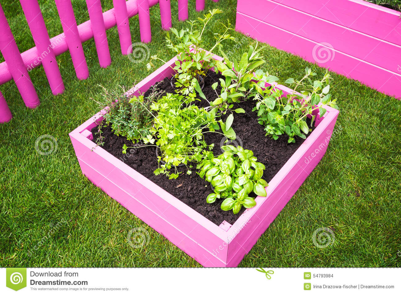 Mini Herb Garden Stock Photo Image 54793984