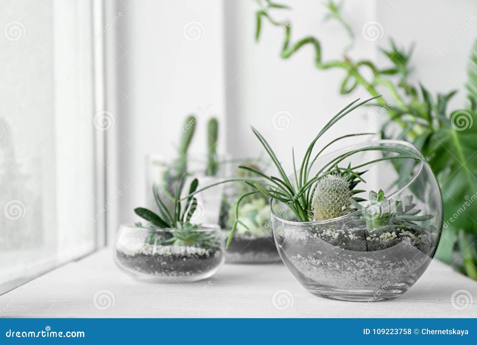 Mini jardín suculento en el terrario de cristal