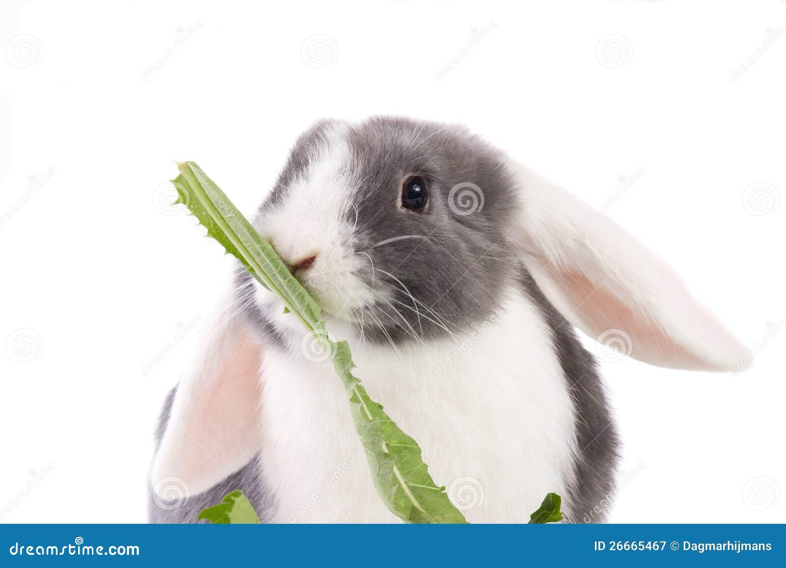 hur du koppla in kanin öron