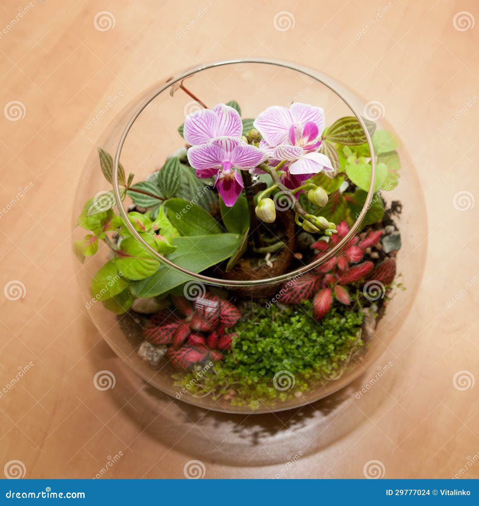 mini orchid 233 e et d autres usines de maison images stock image 29777024