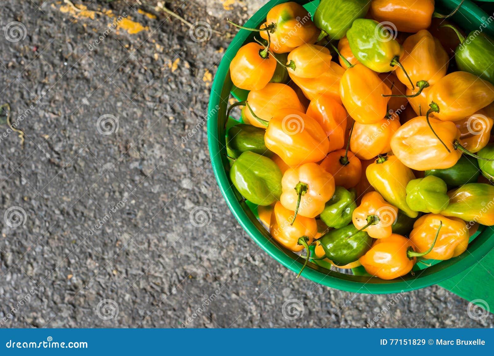 Mini paprikas verts et jaunes