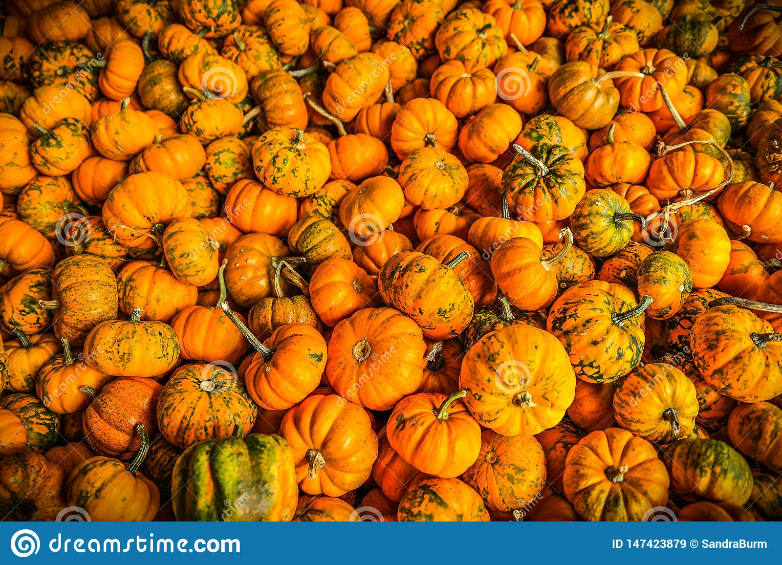 Mini pumpkins in autumn