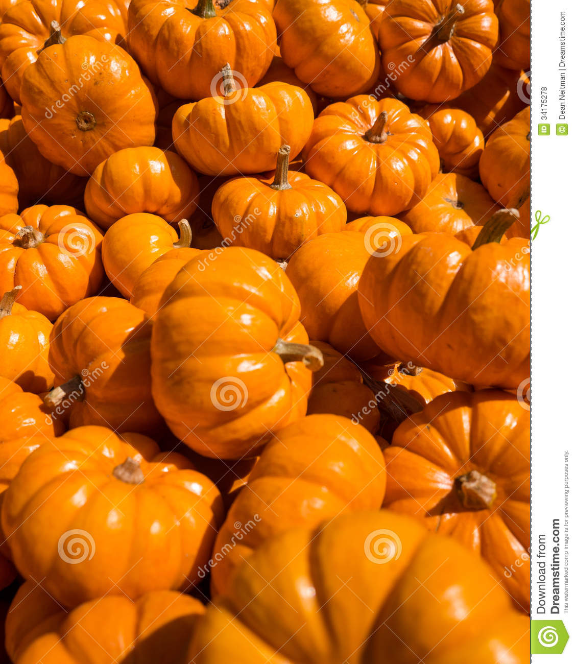 how to grow mini pumpkins