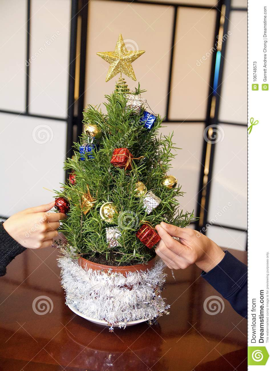 Mini Rosemary Christmas Tree Being Decorated With Gold Star
