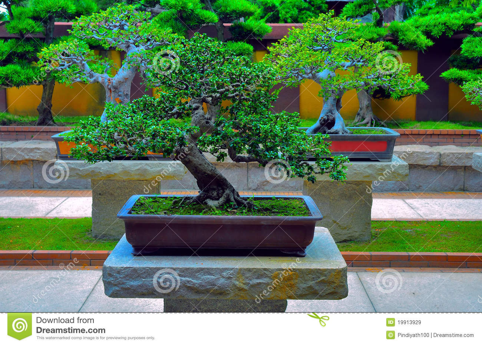 Miniature bonsai tree royalty free stock images image for Zen garden trees