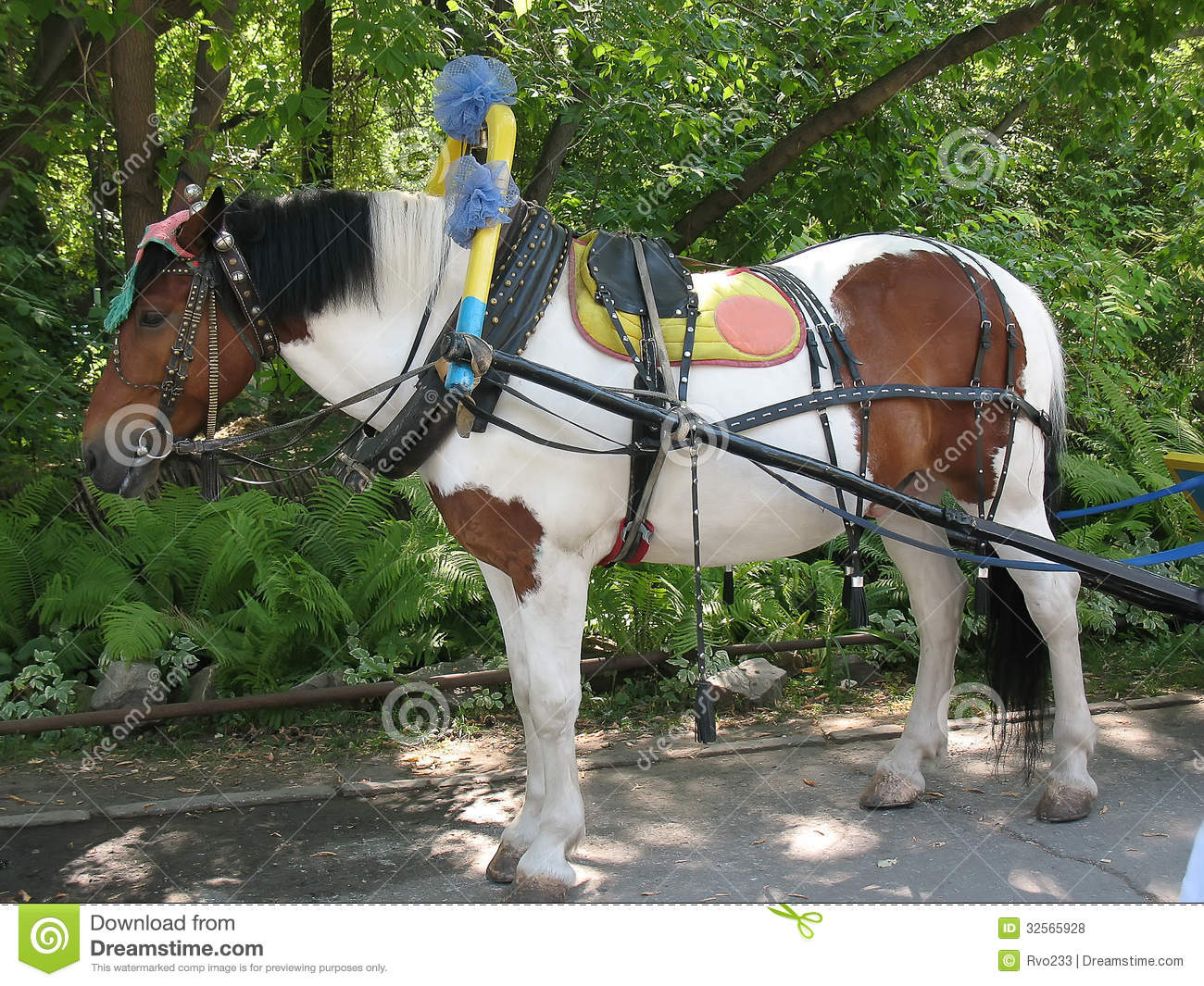 Miniature Horse In Harness Stock Photo  Image Of Mare