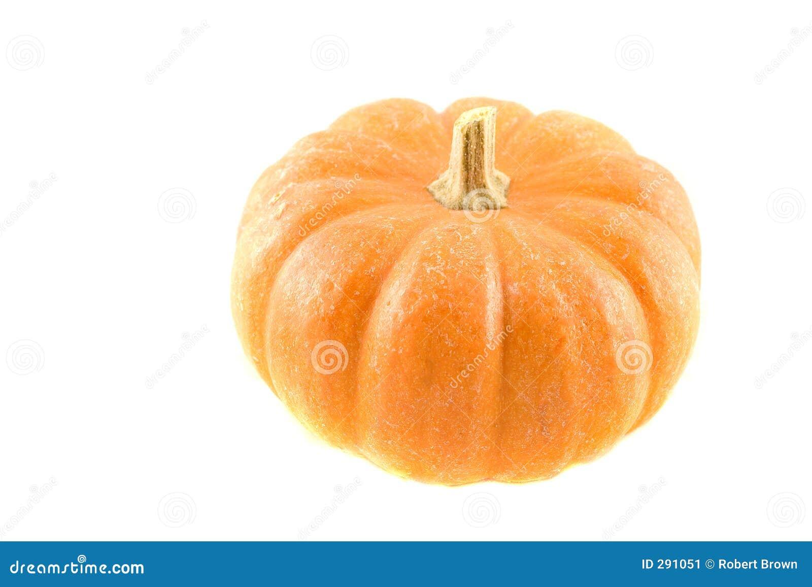 Miniature Pumpkin 6