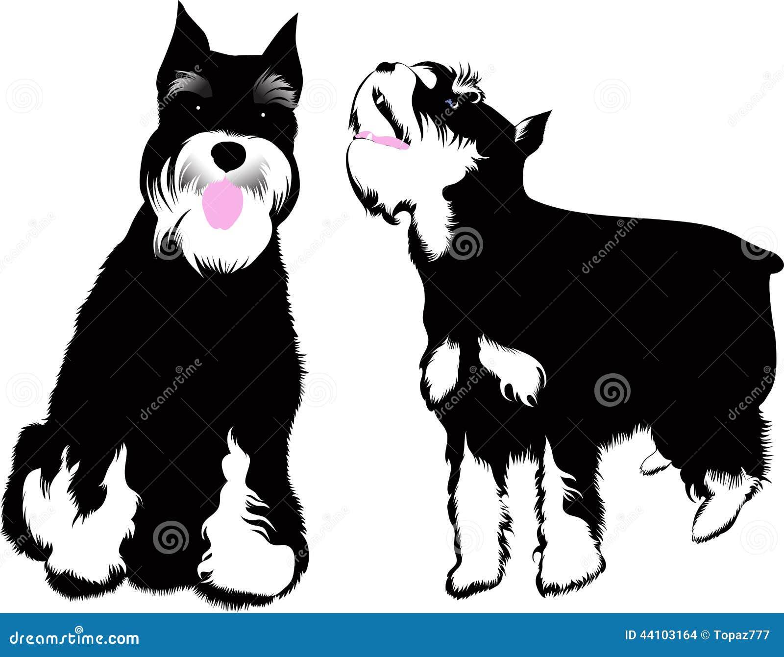 Schnauzer dog vector