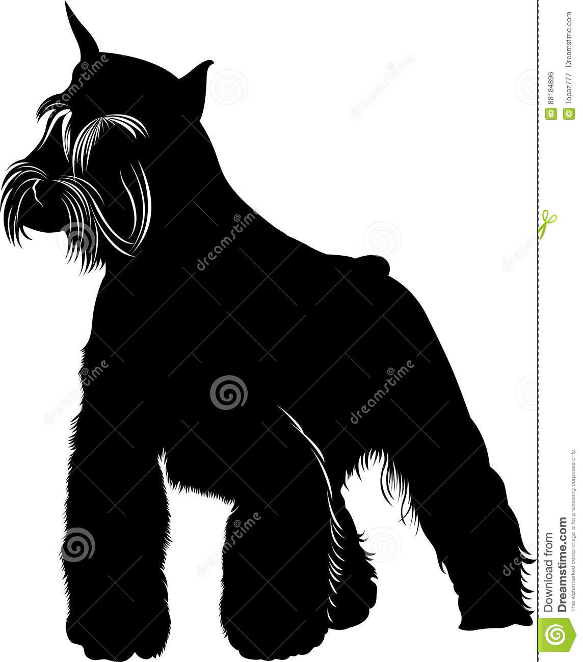 Schnauzer Cartoons Illustrations Amp Vector Stock Images
