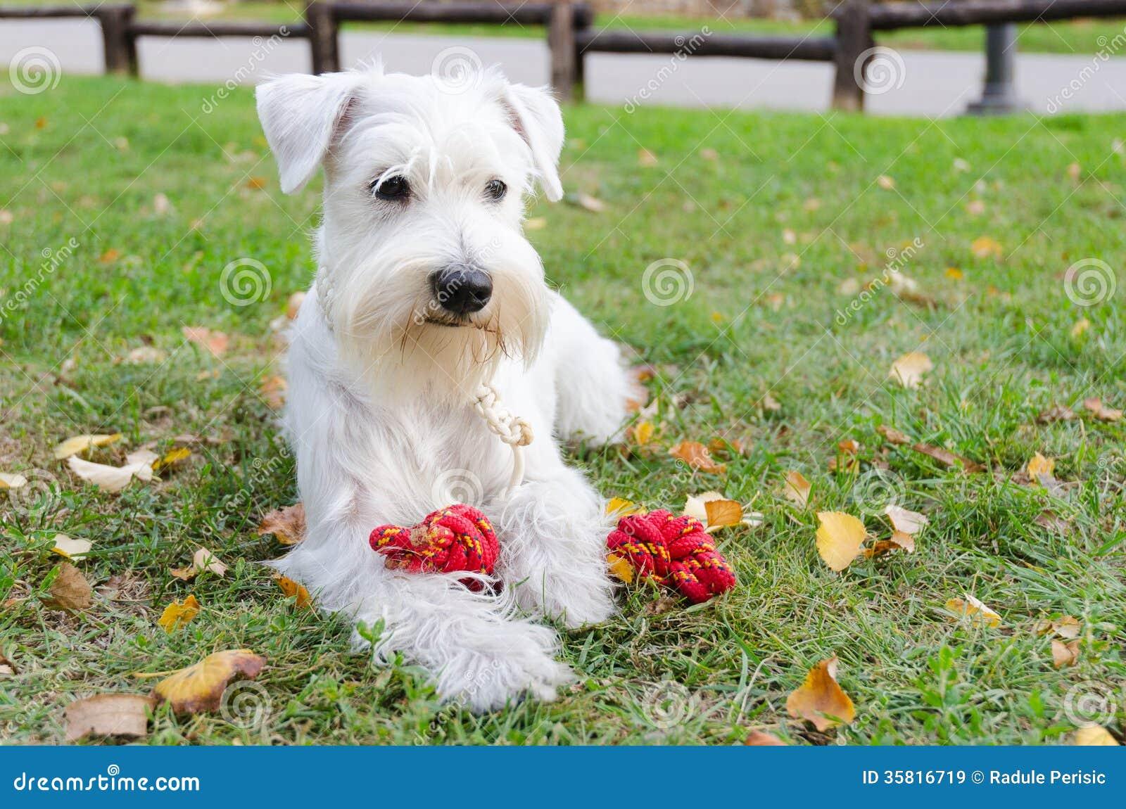 puppies hd wallpaper download