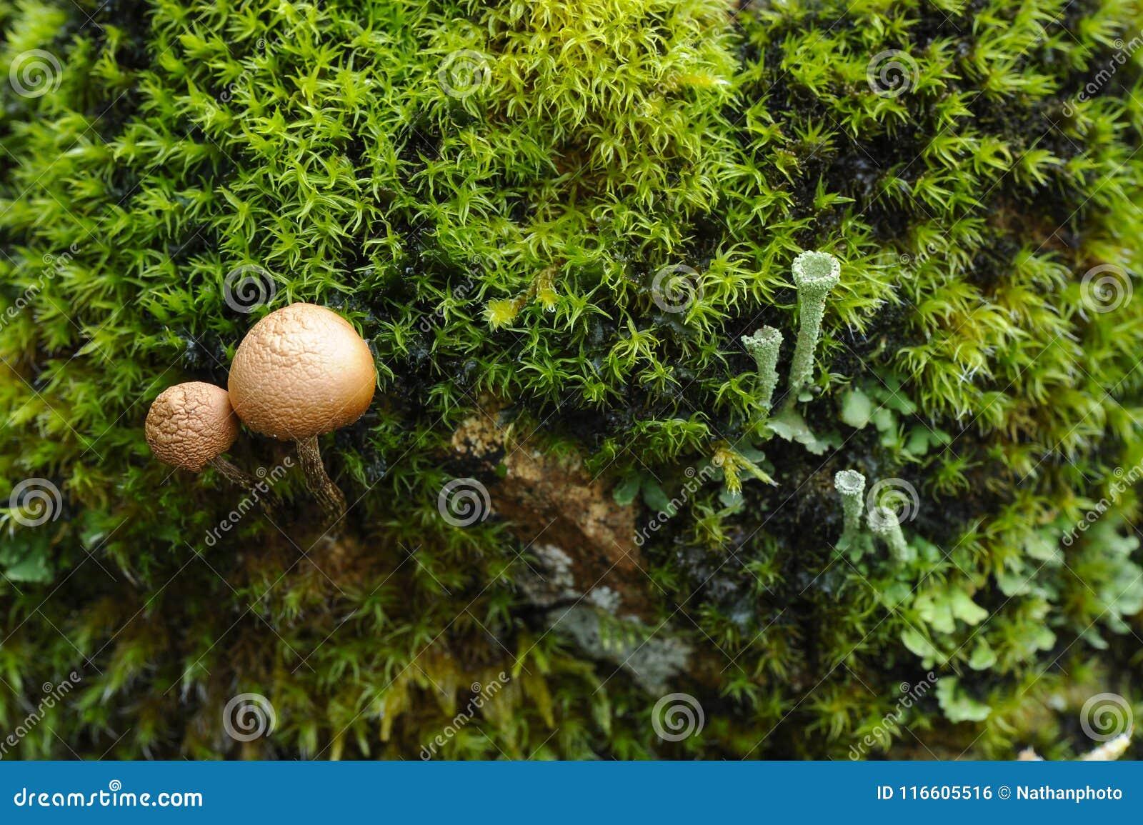Miniature World Of Lichen, Moss And Mushrooms Stock Photo - Image of