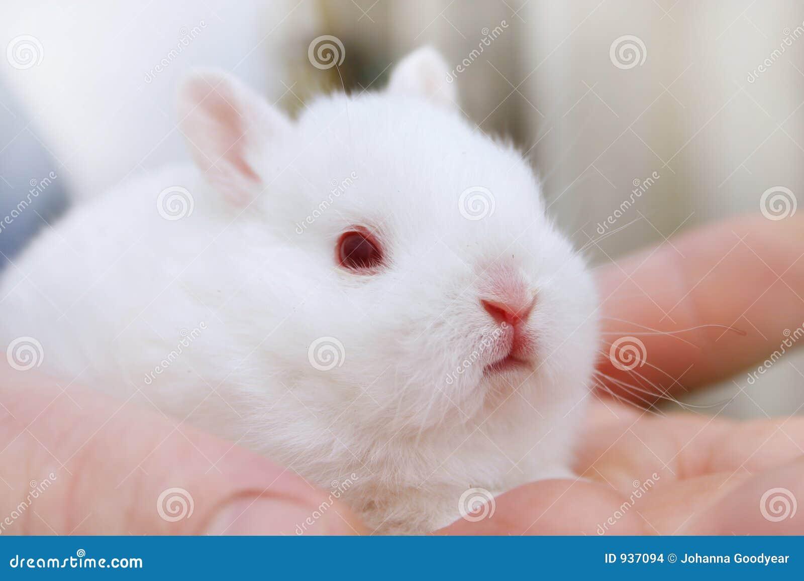 Miniaturowe króliki