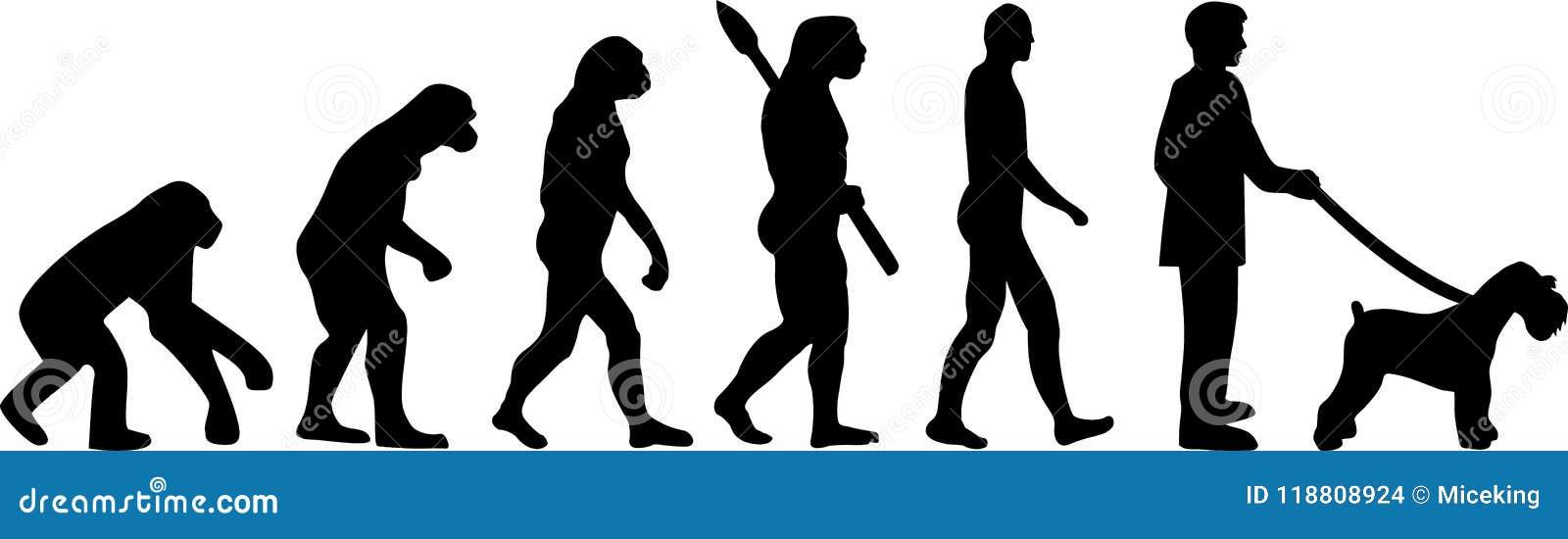 Miniaturowego Schnauzer ewolucja