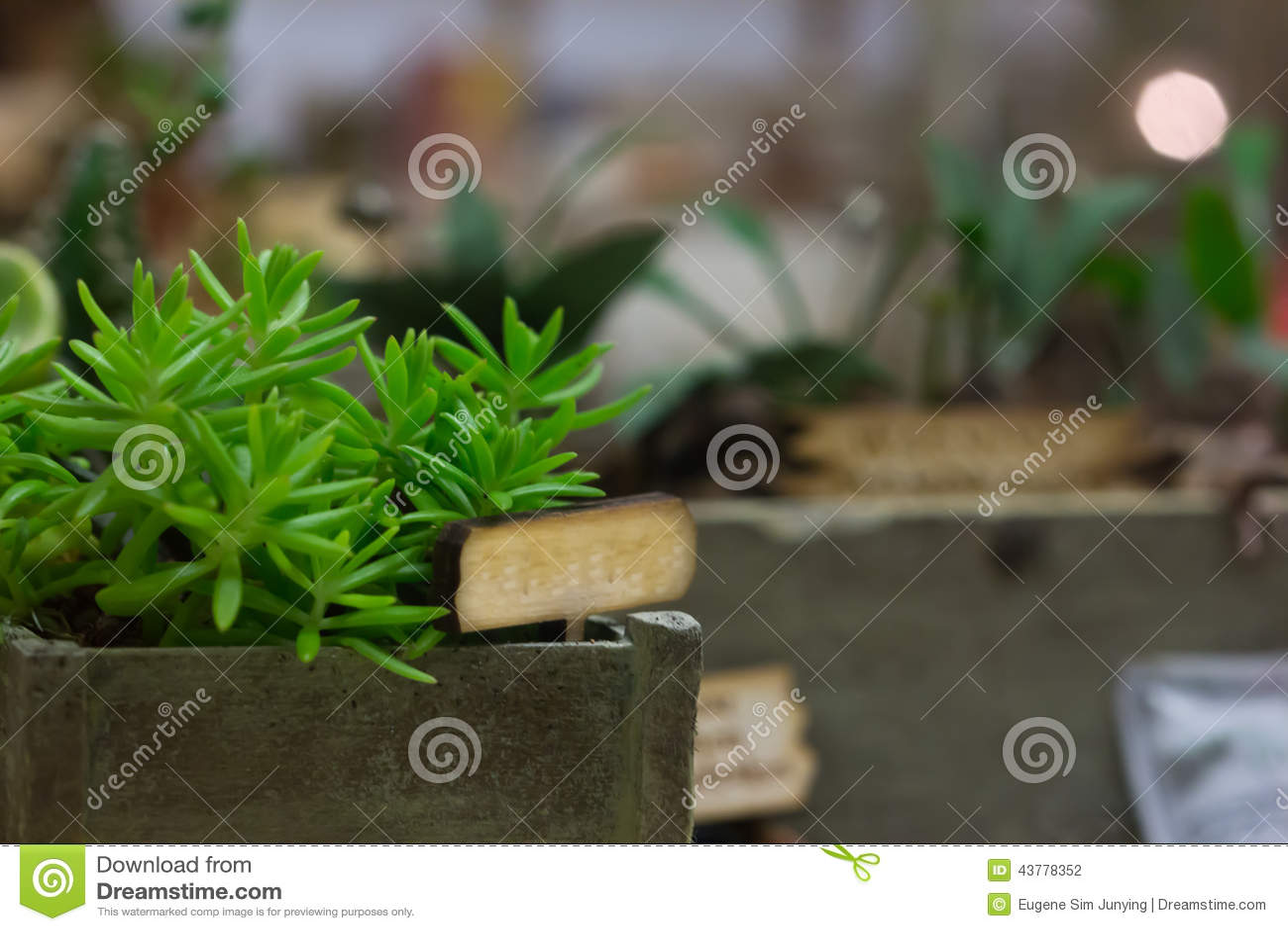Miniaturowy glasshouse z plantatorskimi pudełkami