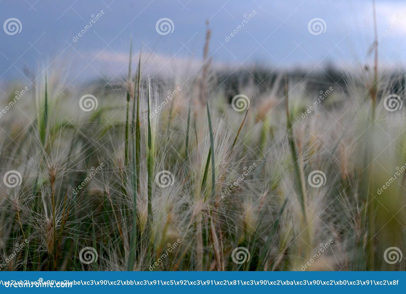 Miniaturowy słońce na trawie