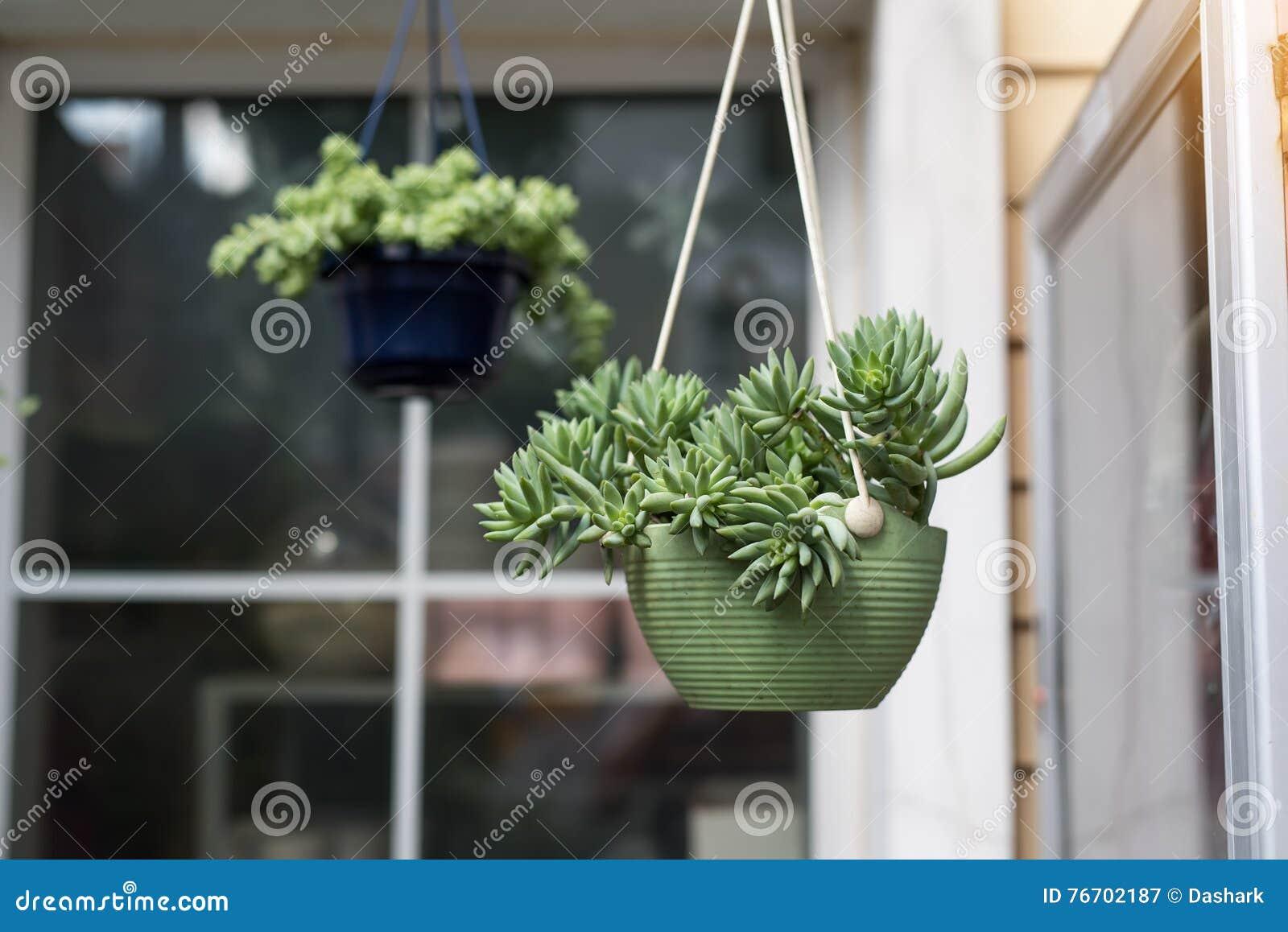 Miniatyrsuckulentväxter