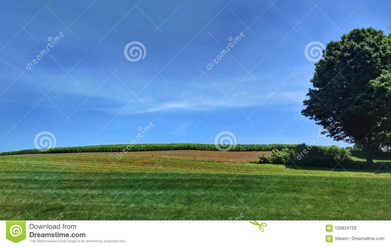 Horizontal Oriented Simple Lines Of A Country Field Tree And Skies In Summer Wallpaper