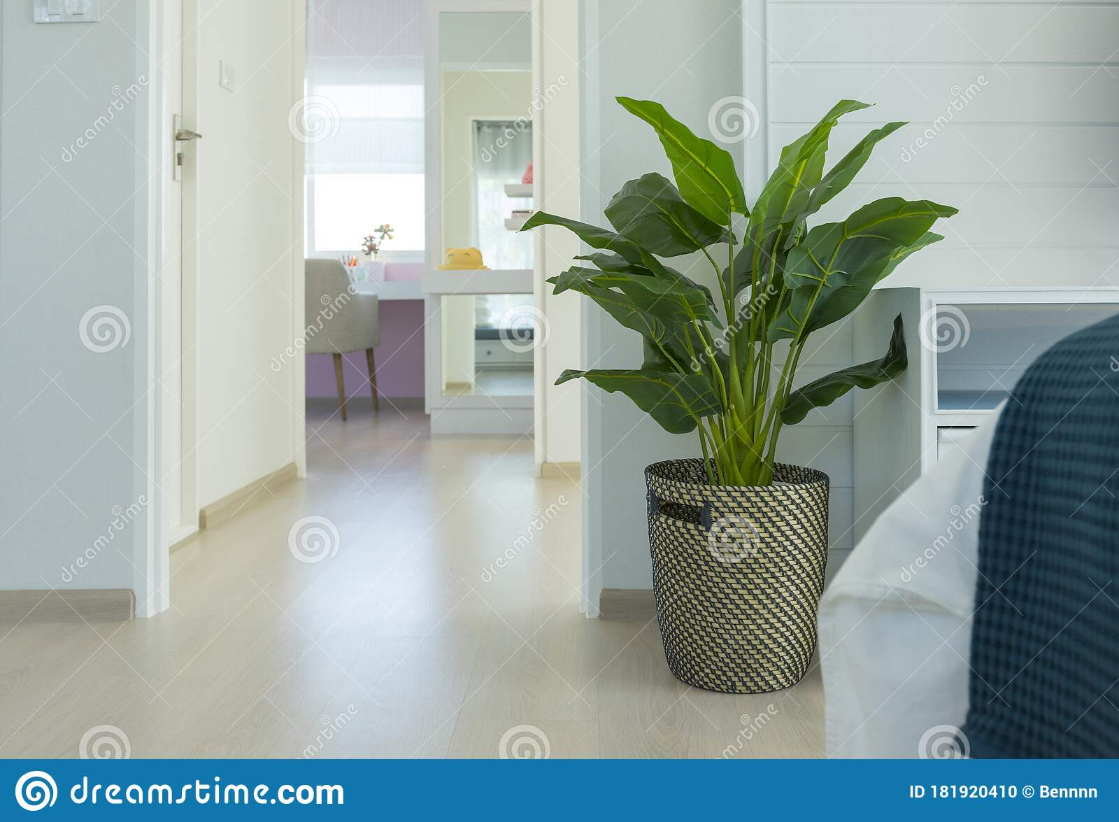 Minimalist Interior Design Of A Living Room With Indoor Plant Stock Photo Image Of Blue Cushions 181920410