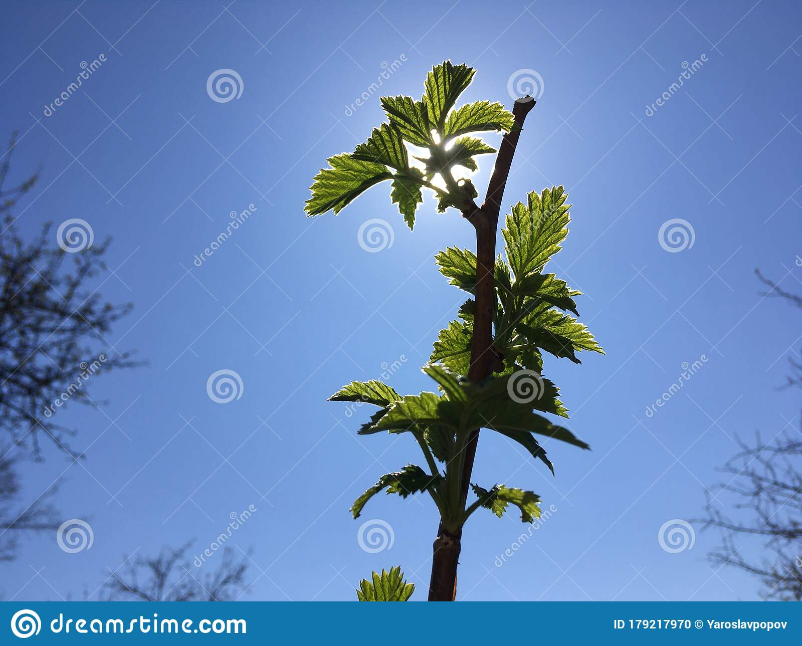 Minimalistic Natural Wallpaper Green Leaves And Blue Sky Stock Photo Image Of Life Shot 179217970