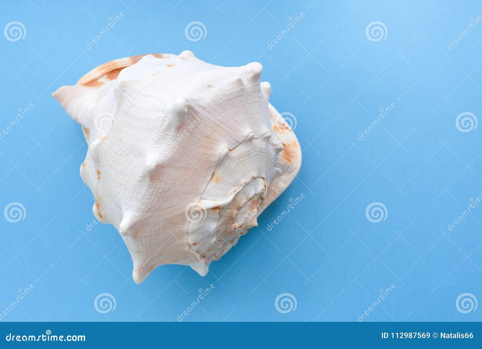 Minimalistic pastel blue background with one big graceful textured seashell.