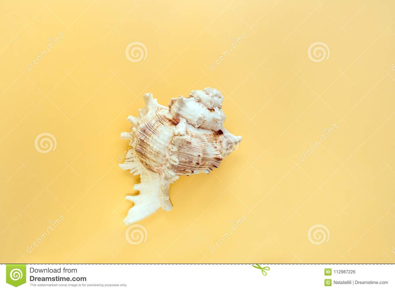 Minimalistic pastel yellow background with one textured carved seashell in the middle.