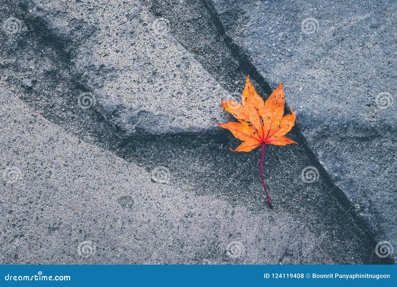 Minimalisty styl, Retro koloru filtr Czerwony suchy liść klonowy jest