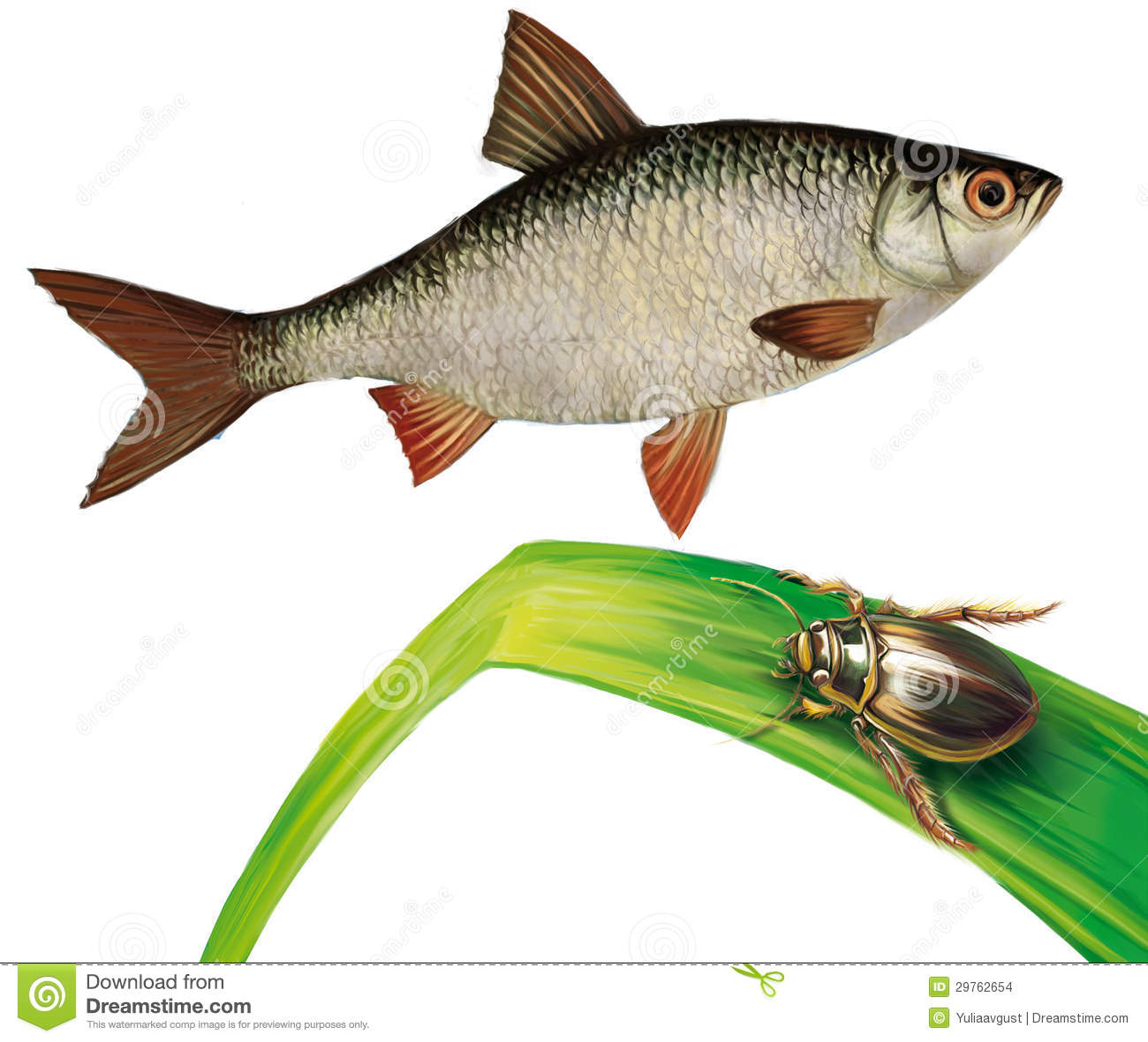 Minnow Fish And Water Bug On Water Grass Stock Illustration ...