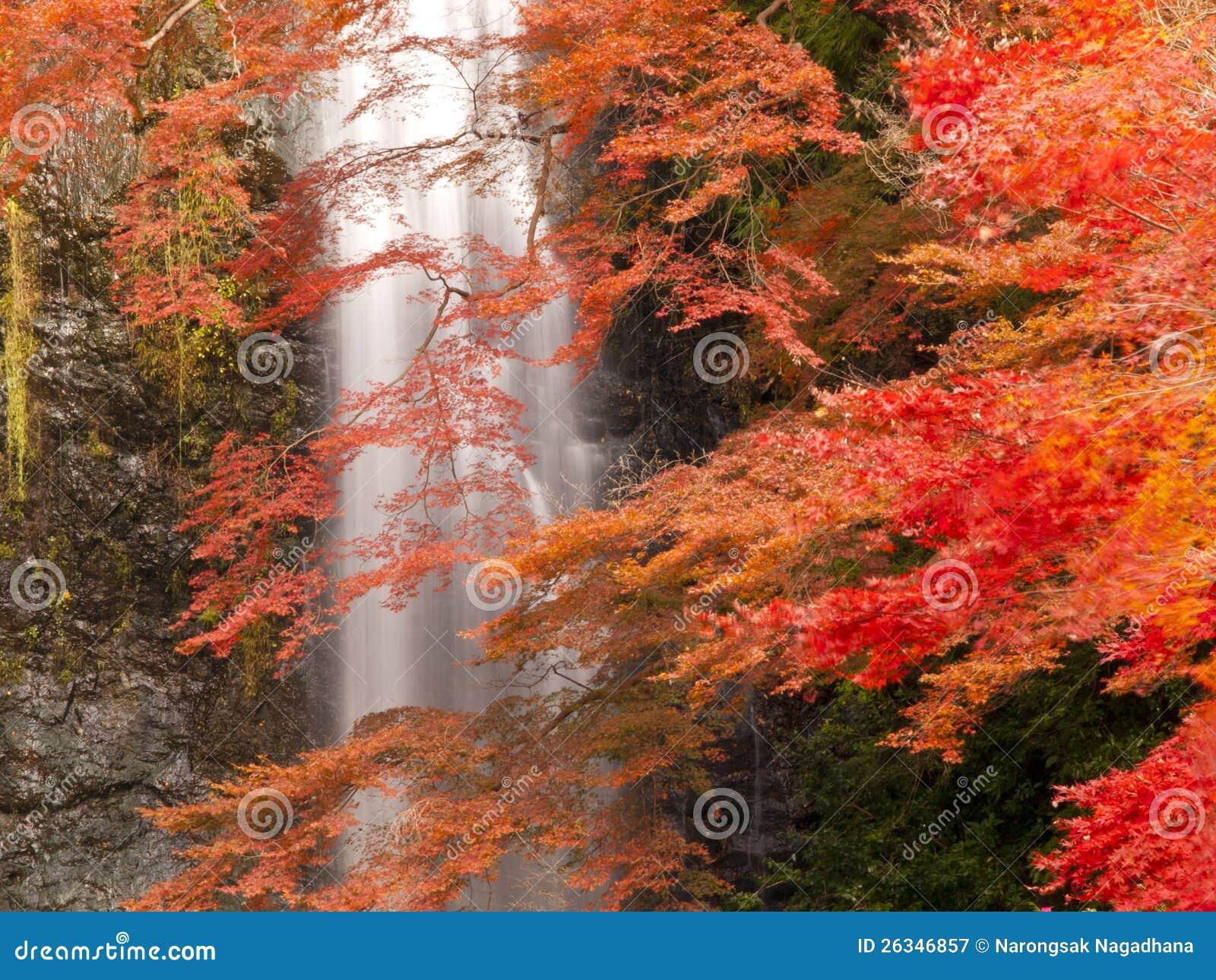 Minoh waterfall in autumn