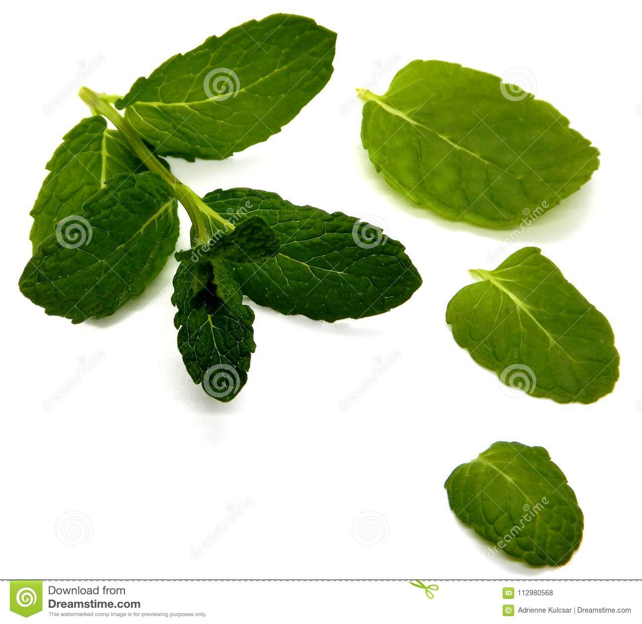 Mint against a white background