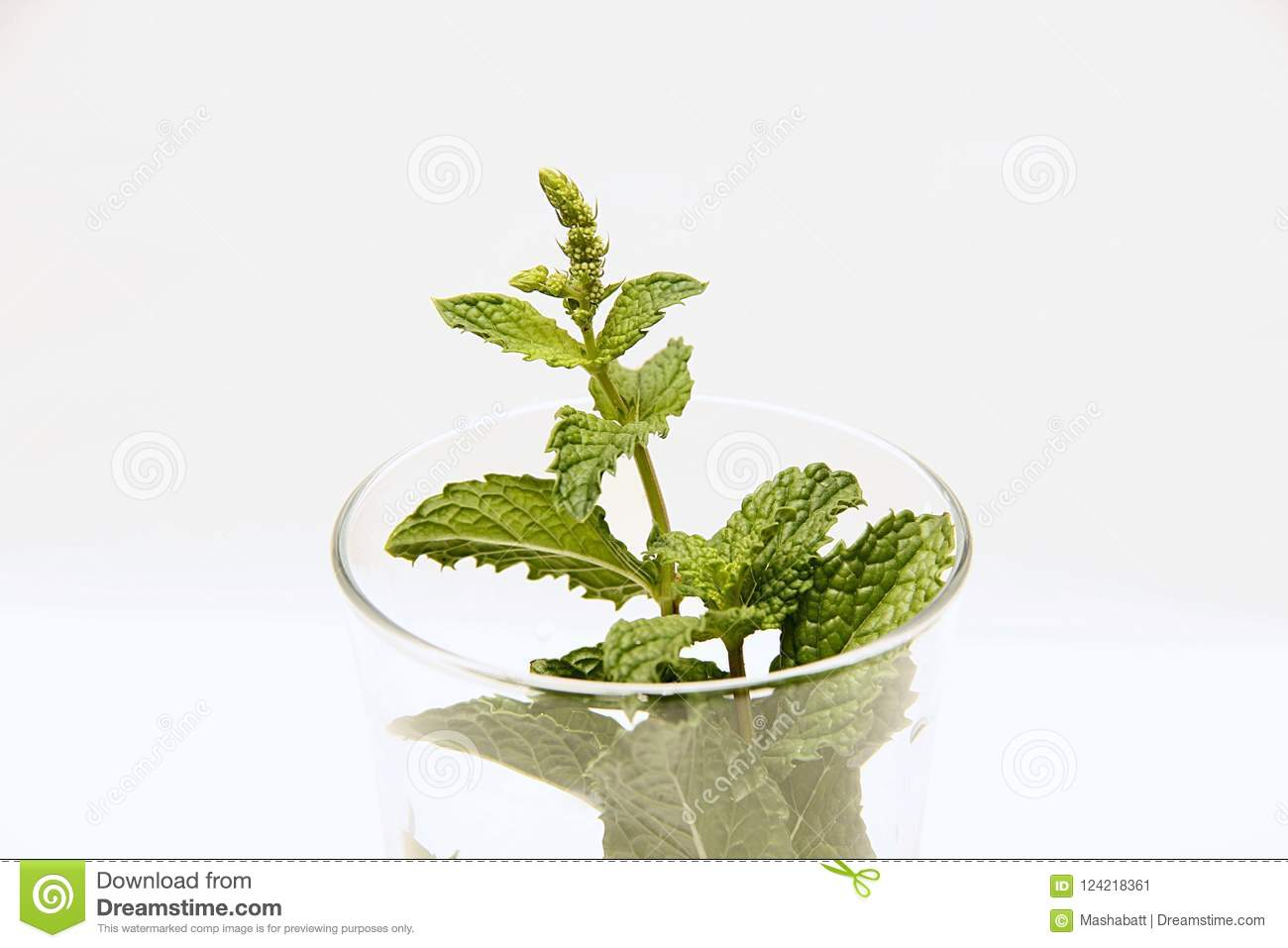 Mint In The Glass  Herbs For Food And Medicine Stock Image - Image
