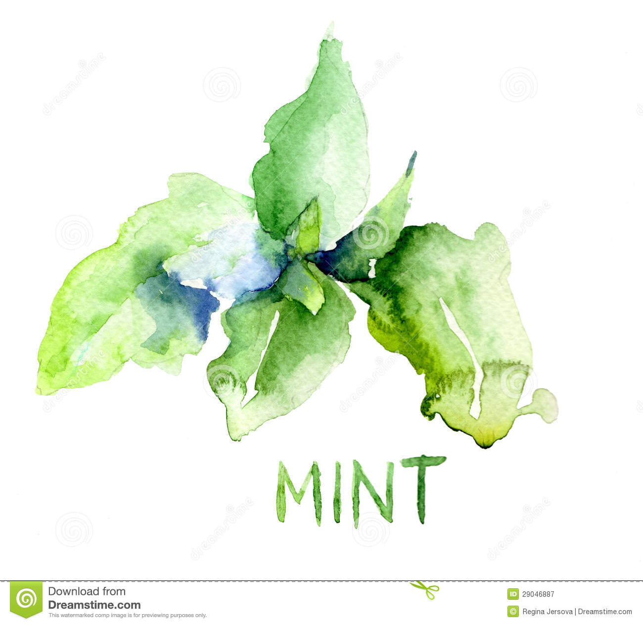 Mint Leaves Royalty Free Stock Photography - Image: 29046887