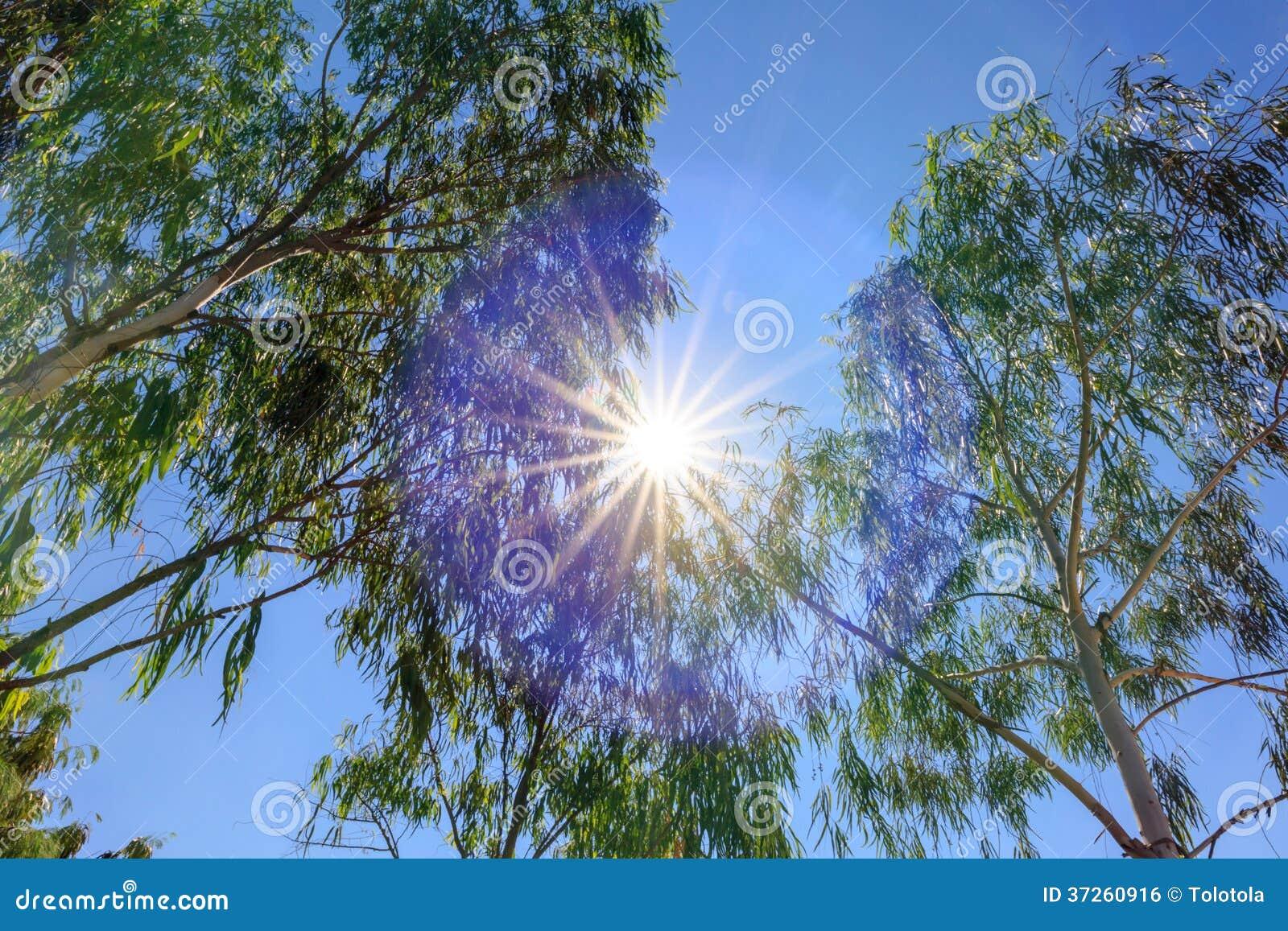 Mirada para arriba al rbol con el fondo del sol for Fondo del sol