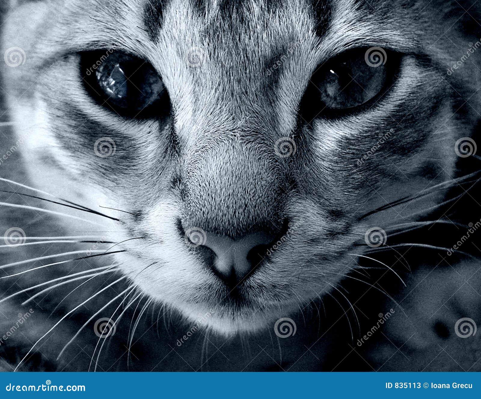 Mire en mis ojos - gato