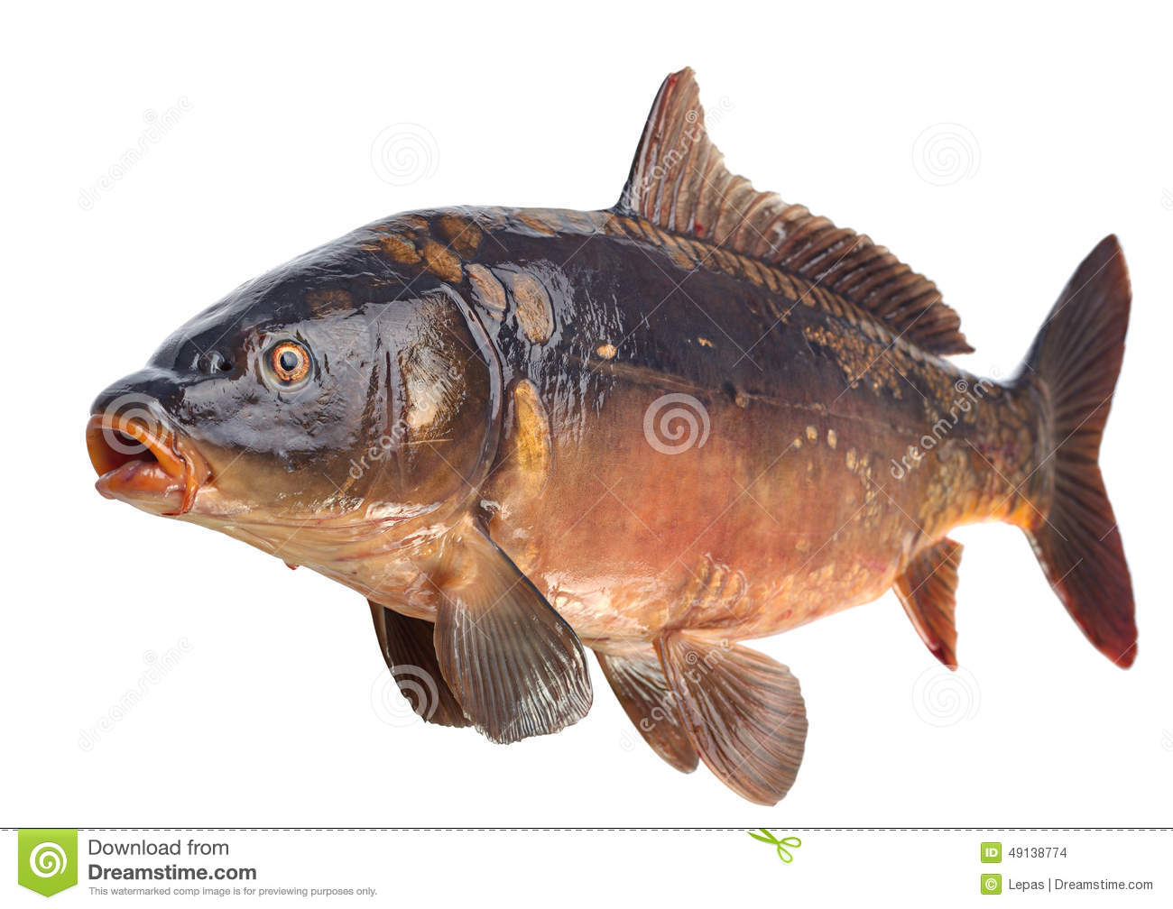 Specchio Appendiabiti Pesce Fish : Mirror carp river fish stock photo image