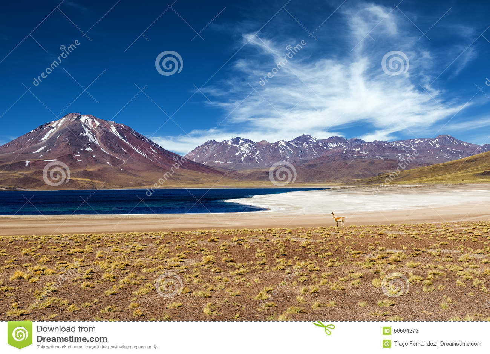 Miscanti Lagoon in the Atacama Desert